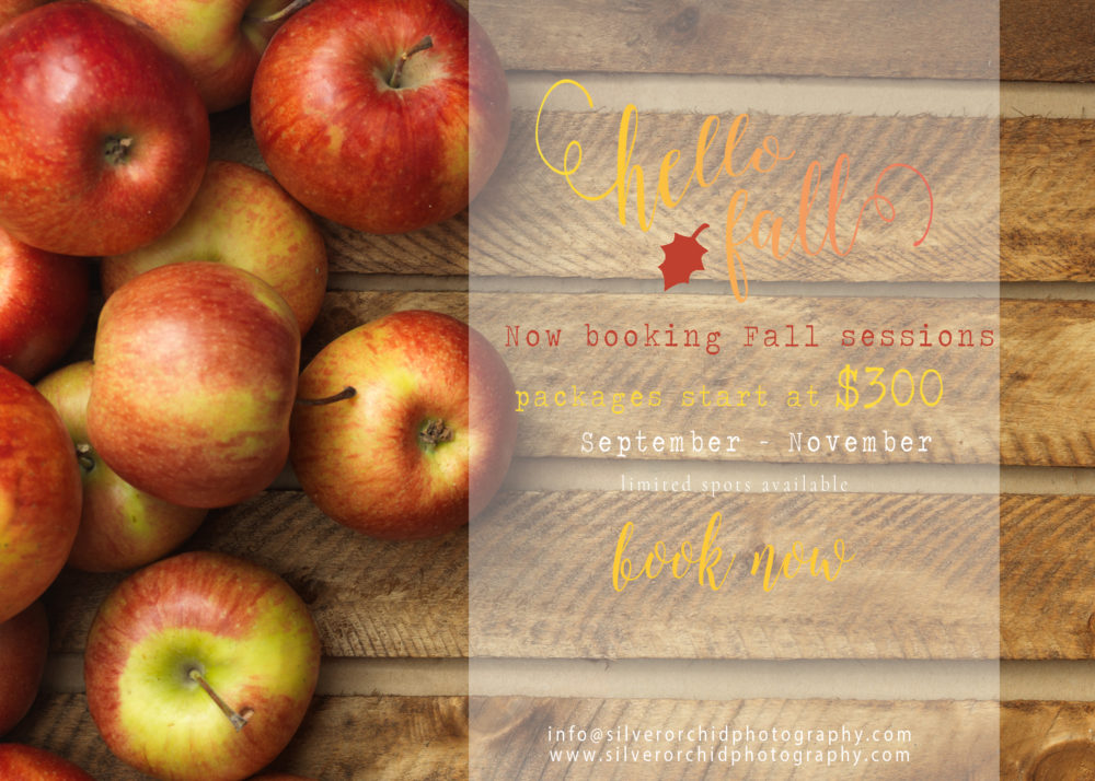 silver orchid photography, fall session, pumpkin, apple