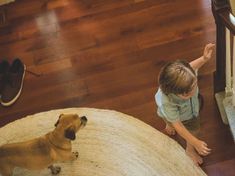 Family lifestyle photograph of toddler boy and family dog by Southern Pennsylvania and Philadelphia lifestyle photographer Tara Lynn of Silver Orchid Photography